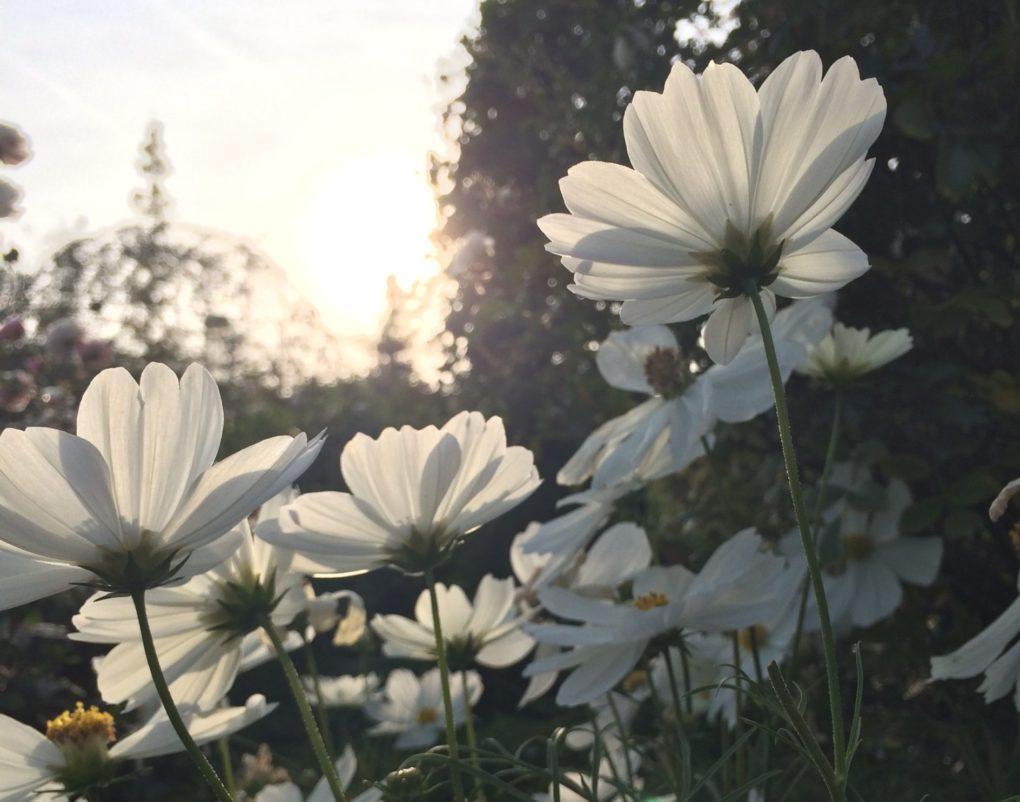 光に向かって伸びる花